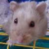 dokkaebi: my ham! gitcherown. >P ([pipkin] o hai)