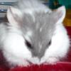 dokkaebi: my ham! gitcherown. >P ([gulliver] schemer)