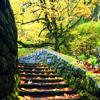 diorama: (steps)