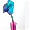 balivatn: multicolored lily in a vase (lily)