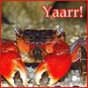 "cyprinella: Red crab with the caption ""Yaarr!"" (craaaab people)"