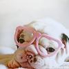 honeypetal: (stock » puppy)