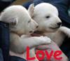 bethbethbeth: (Bear Love (bbb))