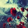 neppu: (poppies)