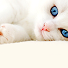 everythingiam: (STOCK :: blue eyed kitty cat)