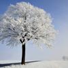 diorama: (winter tree)