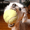 harroldsheep: (tennisball)