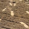 lasthalfmile: (footprints in dust)