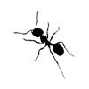 ant: (ant)