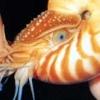elionwyr: (cephalopod)