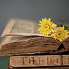 demiurgic: ([misc] yellow flowers)