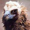 sprinklethief: (fucking vultures)