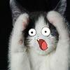 esque: (kitty D:)