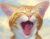 nebbia: (кот)