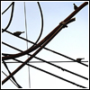 ahouseforrain: abstract crop of birds and telephone wires (thinking in geometry)