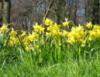 ange_k: (Spring)
