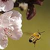 pecunium: (Bee Butt)