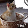 jennaria: Kitty in a teacup (tea?)