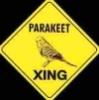 kippurbird: (Parakeet crossing)