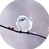 kippurbird: (white tit head tilt)