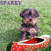 guppy_sandhu: (sparky)
