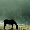 ikissdhimbck: (Horse)