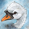 "avia: A cute painted portrait of a swan, in a realistic but ""furry"" style. (swan painted face)"