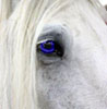 not_a_horse: (blue eye)