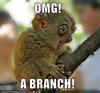 nath: (OMG branch)