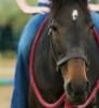 foalstory: (Default)