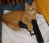 ravan: (orange kitten gun)