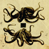 hyacinth: (octopus diagram)