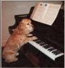 maestrodog: (Default)