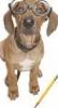 maestrodog: (dogfacts)