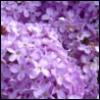 bangtock: (purple)