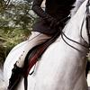 cleo: (Australia: horse)