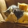 aredblush: (stock : animal : kittens heap)