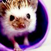 ext_959346: hedgehog (pic#2605865)