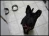 petowners: (grierdog)