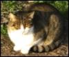 vla22: photo of smug cat (smug, cat)
