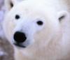 kragore: (Bear)