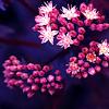 allegro: (flora)