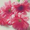 fairyblue: (flowers)