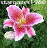 stargazer1960: (lily) (Default)