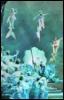 catchmyfancy: (enchanted island - neptune and court)