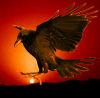 willowoak: (stealing the sun)