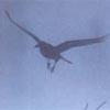 crows: (mist)