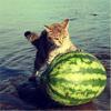 keltik: (cat)