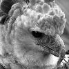 sassybird: (I can be your wingbird.)