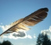 fanciful_flights: (feather)